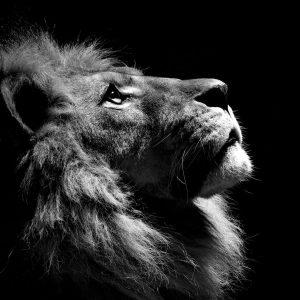 Lav – osećaj o identitetu