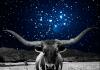 Tranzit Venere u Ribama kroz kuće natalnog horoskopa